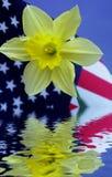 Gele narcis die in Water wordt weerspiegeld Royalty-vrije Stock Foto