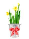 Gele narcis in een pot Stock Foto