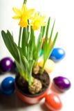 Gele narcis en eieren Stock Afbeelding