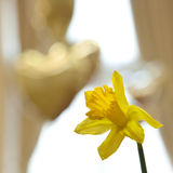 Gele narcis en hartballons stock foto