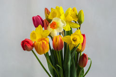Gele narcis en tulpenbloemen Stock Afbeeldingen