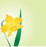 Gele narcis-jonquille vectorontwerp Royalty-vrije Stock Fotografie