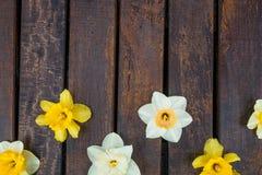 Gele narcis op donkere houten achtergrond Gele en witte narcissen De kaart van de groet De ruimte van het exemplaar Hoogste menin Stock Foto's