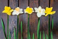 Gele narcis op donkere houten achtergrond Gele en witte narcissen De kaart van de groet Hoogste mening Royalty-vrije Stock Afbeelding