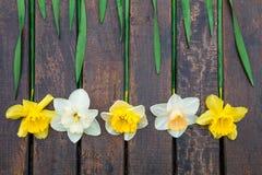 Gele narcis op donkere houten achtergrond Gele en witte narcissen De kaart van de groet Hoogste mening Stock Foto's