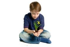 Gele narcis in zijn handen Stock Foto