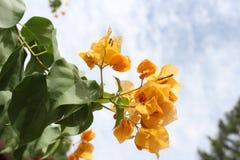 Gele narcisbloem stock afbeeldingen