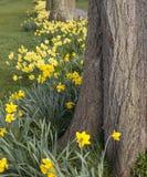 Gele narcisdecoratie royalty-vrije stock afbeeldingen