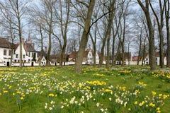 Gele narcissen in beguinage van Brugge stock fotografie