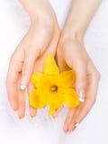 Gele narcissen in de handen Royalty-vrije Stock Afbeelding