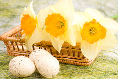 Gele narcissen in de mand en de paaseieren Royalty-vrije Stock Afbeelding