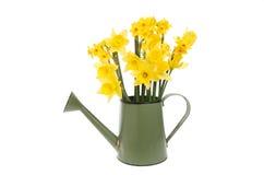 Gele narcissen in een gieter royalty-vrije stock afbeeldingen
