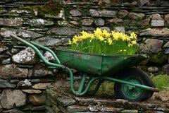 Gele narcissen in een Kruiwagen royalty-vrije stock afbeelding