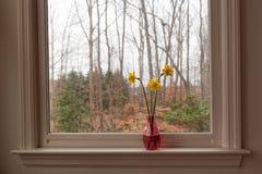 Gele gele narcissen in een roze vaas op een witte vensterbank op een grijze middag stock foto's