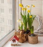 Gele narcissen en hyacinten in manden Royalty-vrije Stock Afbeeldingen