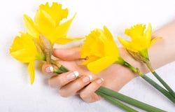 Gele narcissen en vrouwenhand Stock Foto