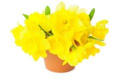 Gele Narcissen/Gele narcissen Stock Afbeelding
