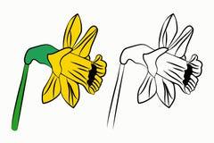 Gele narcissen geplaatst heldere mooi stock foto