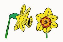 Gele narcissen geplaatst heldere mooi royalty-vrije stock fotografie