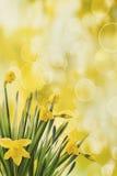 Gele narcissen met bokehachtergrond Stock Foto