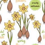 Gele narcissen met bollen en patroon voor achtergrond vector illustratie