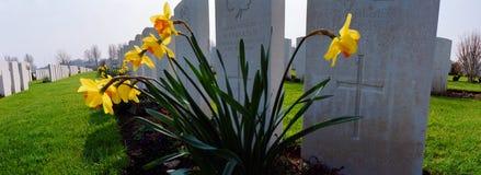 Gele narcissen op een militaire begraafplaats van de eerste wereldoorlog Stock Foto