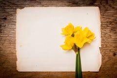Gele narcissen op een stuk van document Royalty-vrije Stock Afbeelding