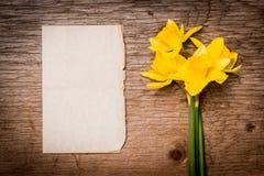 Gele narcissen op een stuk van document Royalty-vrije Stock Afbeeldingen
