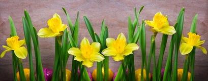 Gele narcissen, paaseieren Stock Afbeelding