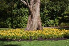 Gele narcissen, Victoria Esplanade royalty-vrije stock afbeeldingen