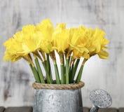 Gele narcissen in zilveren gieter Royalty-vrije Stock Afbeeldingen