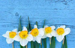 Gele narcissenbloemen op blauwe houten achtergrond van hierboven Royalty-vrije Stock Foto's