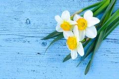 Gele narcissenbloemen op blauwe houten achtergrond van hierboven Royalty-vrije Stock Fotografie