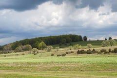 Gele narcissenopen plek - Harghita, Transsylvanië (1) Stock Afbeelding
