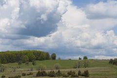 Gele narcissenopen plek - Harghita, Transsylvanië (2) Royalty-vrije Stock Afbeeldingen