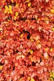 Gele natte bladeren op de boom Stock Foto