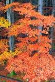 Gele natte bladeren op de boom in het bos Stock Foto