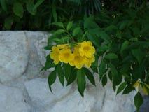 Gele natuurlijke bloem stock afbeeldingen