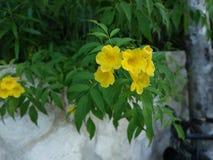 Gele natuurlijke bloem royalty-vrije stock foto