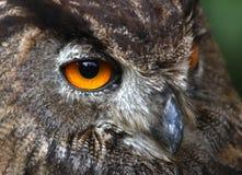 Gele ogen van een UIL bij nacht de jacht Stock Foto