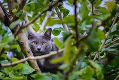 Gele ogenkat op een boom Stock Foto's