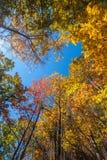 Gele, oranje en rode de herfstbladeren - dalingslandschap Stock Foto's