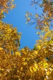 Gele, oranje en rode de herfstbladeren - dalingslandschap Stock Foto