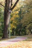 Gele, oranje en rode de herfstbladeren in mooi dalingspark Iecava letland royalty-vrije stock afbeeldingen