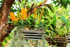 Gele orchideeën Royalty-vrije Stock Afbeelding