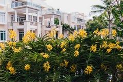 Gele Orchideeën met Groene Bladerenachtergrond Stock Afbeeldingen