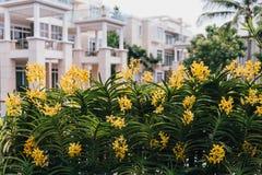 Gele Orchideeën met Groene Bladerenachtergrond Royalty-vrije Stock Foto
