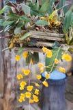 Gele orchidee onder de houten orchideepot Royalty-vrije Stock Foto
