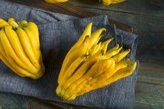 Gele Organische Buddhas-Handcitrusvrucht Royalty-vrije Stock Afbeelding