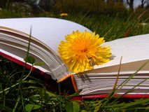 Gele paardebloem die op boek met harde kaftboek leggen in de tuin stock afbeelding